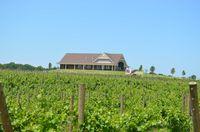 12C Outside w Vineyards